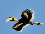 Malaysia - hornbill habitats