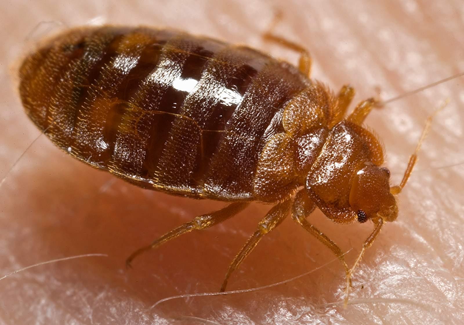 Don't get the travel bed bug!