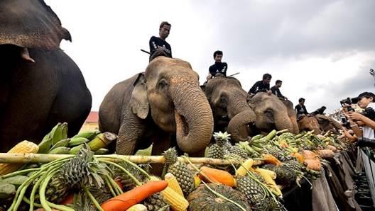 Thailand : Elephant Cup Polo