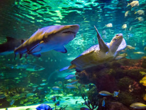 Ripleys' Aquarium of Canada